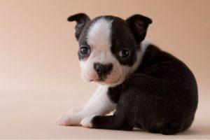 Puppy Has diarrhea but seems fine