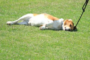best dry food for dogs with sensitive stomachs