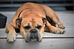 what to do if your dog has diarrhea