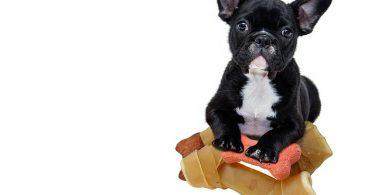 Diamond Naturals Dog Food Review