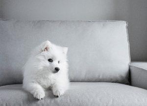 best dog food for sensitive stomach-vomiting